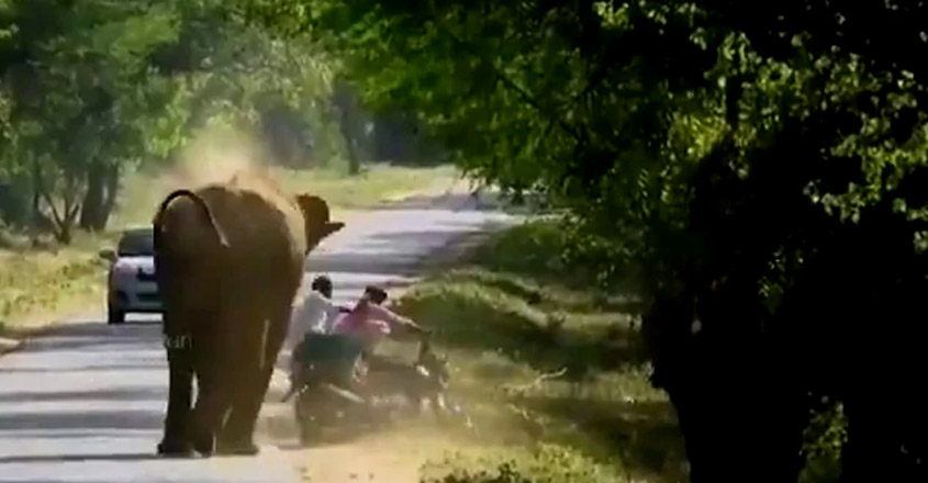 Elephant Charges At Bike, Forces Riders To Run