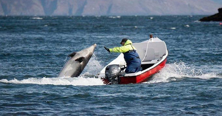 Fungie The Dolphin Is Feeling The Lockdown Blues, But A Kind Fisherman Is Keeping Him Company