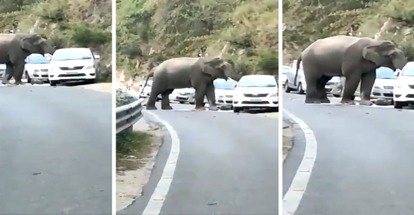Elephant Spotted Messing Around With Car In Uttarakhand Amid Lockdown