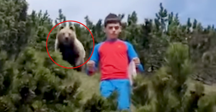 Scary Video Shows Bear Following Boy. Watch How He Avoided An Attack