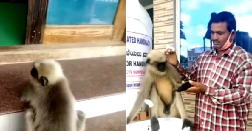 Injured Monkey Shows Up At Karnataka Hospital For Help, Gets Treated