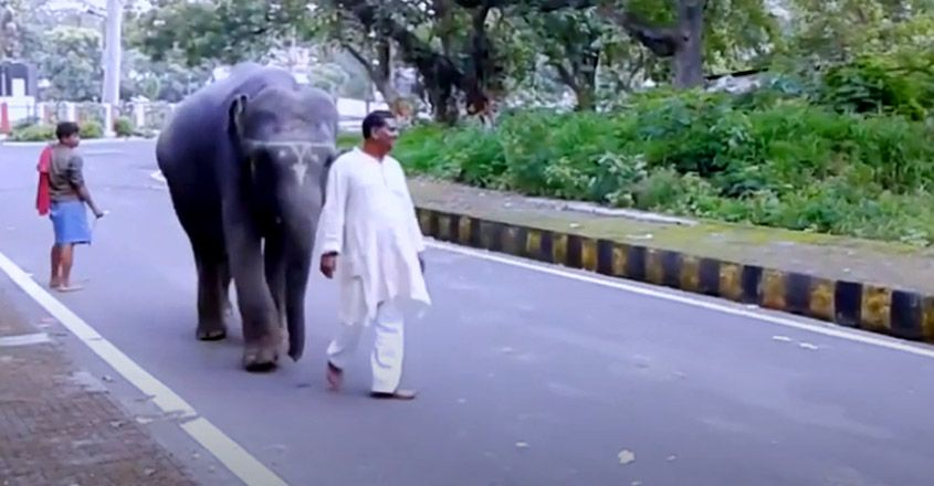 Man in Bihar Donates His Entire Land to Two Elephants