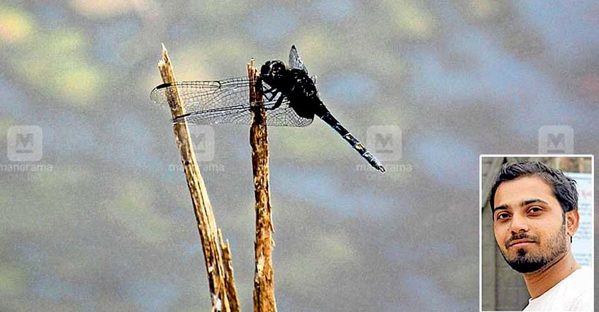 A rare dragonfly spotted in Kasargod