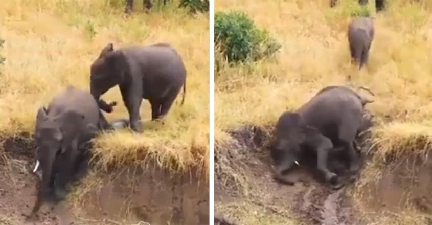 Cute Little Elephants Slide Down Slope for Fun