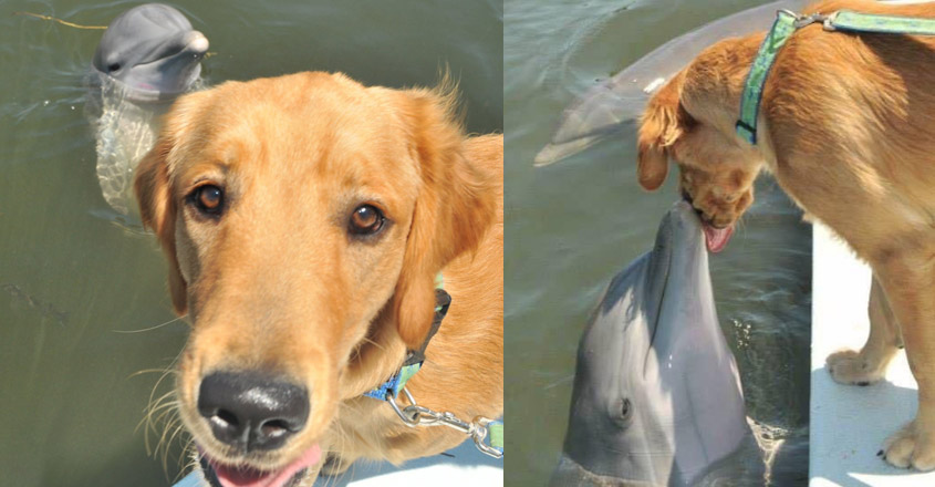 Dog Meeting His Best Friend, A Dolphin