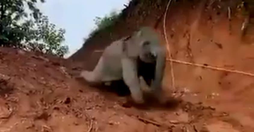 Elephant slides down a slope