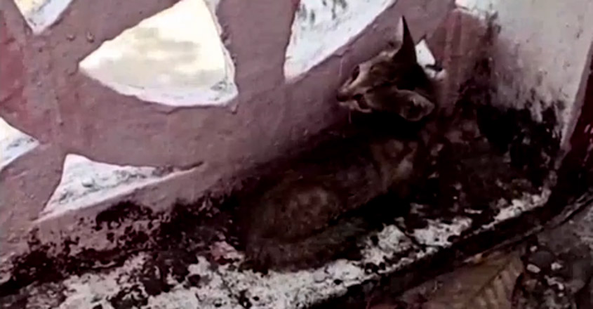Cat saved after being trapped in pipe