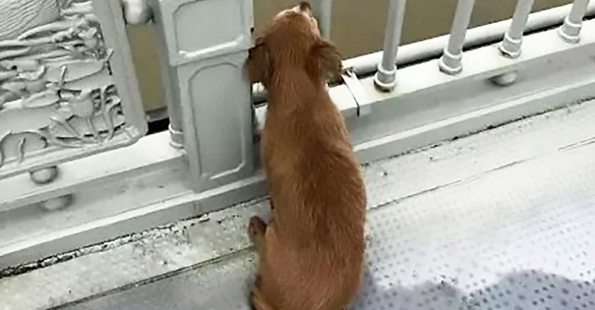 Dog Waits For Owner's Return At Spot Where He Committed Suicide Days Ago