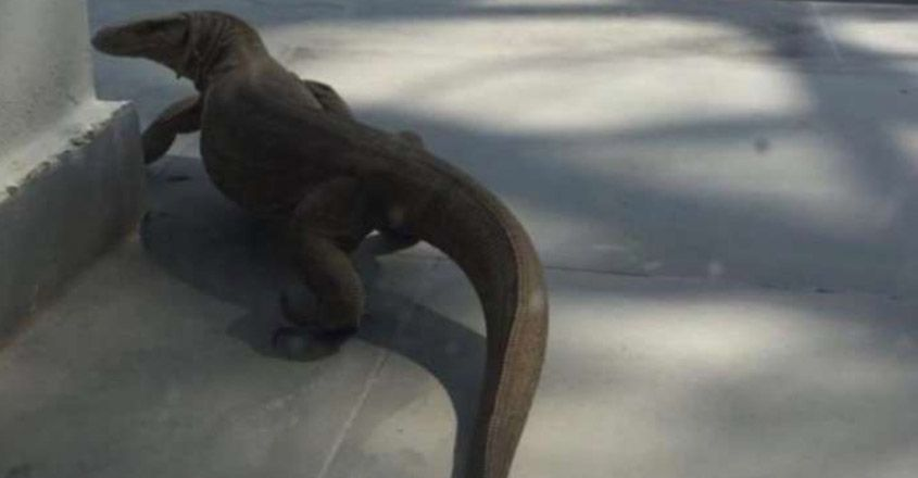 Twitterati shocked after Monitor lizard spotted in Delhi home