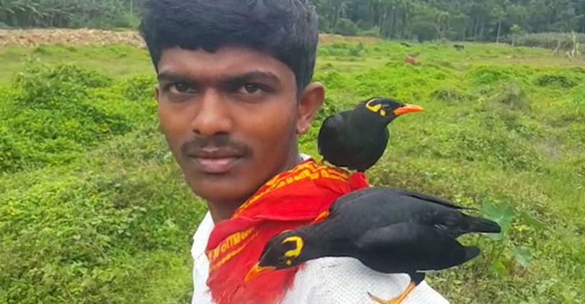 Unusual And Heartwarming Friendships Between Human And Birds