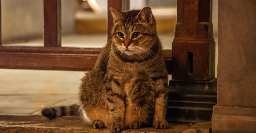 Gli the cat can stay even as Istanbul's Hagia Sophia