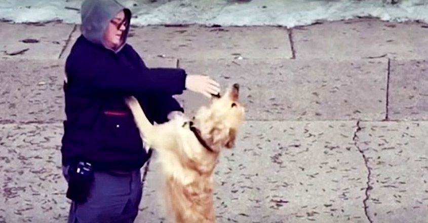 Mailman Just Lost His Dog; Doesn't Expect The Friendship A Golden Retriever On His Route Offers