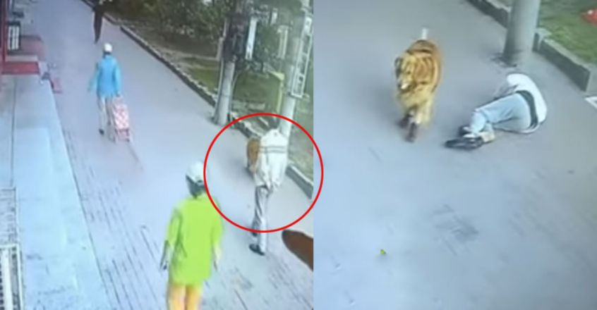 Cat Comes Crashing Down on Chinese Man's Head from Sky, Knocks Him Unconscious
