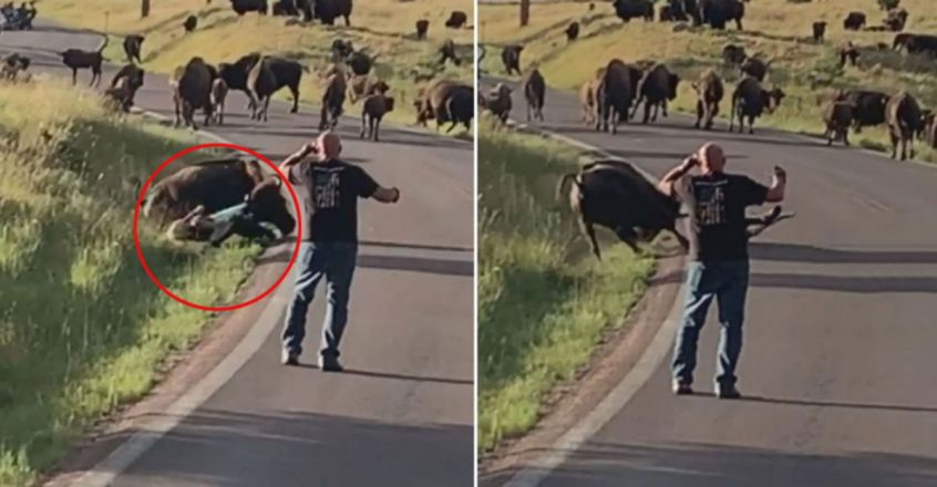 Woman attacked by bison at Custer State Park