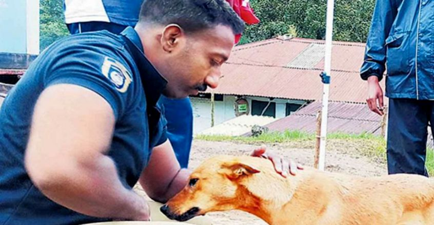 Kuvi The Dog That Traced Its Owner's Body In Munnar Landslide