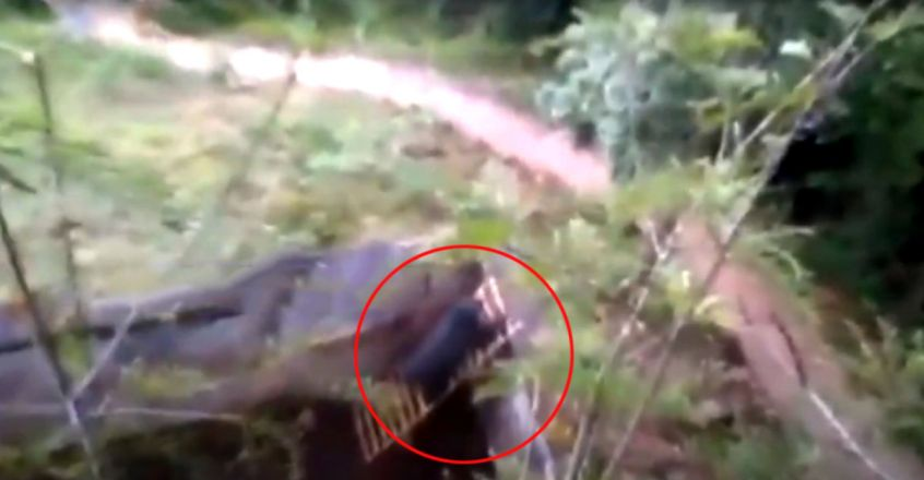 Forest officials in Nilgiri rescue bear trapped in a ditch