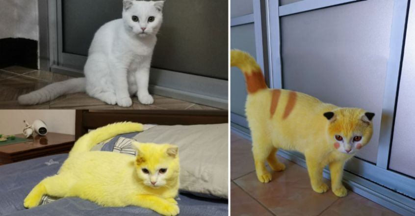 Home remedy gone wrong, pet cat's white fur turns yellow