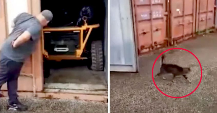 Cat survives two months inside shipping container without food & wate