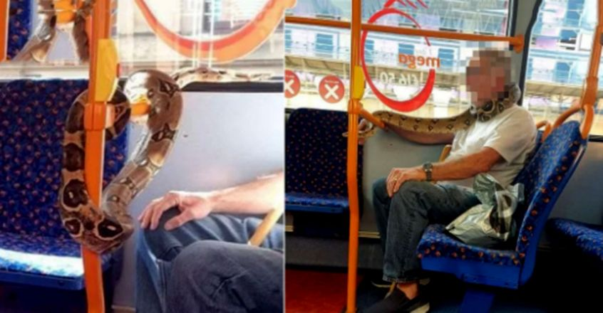 Man spotted wearing huge snake instead of face mask while in a bus