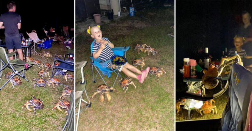 Family's Picnic Invaded By Giant Crabs. Pics Are Terrifying