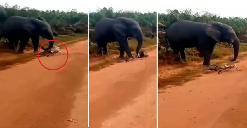 Miraculous escape for man as tusker attacks his cycle
