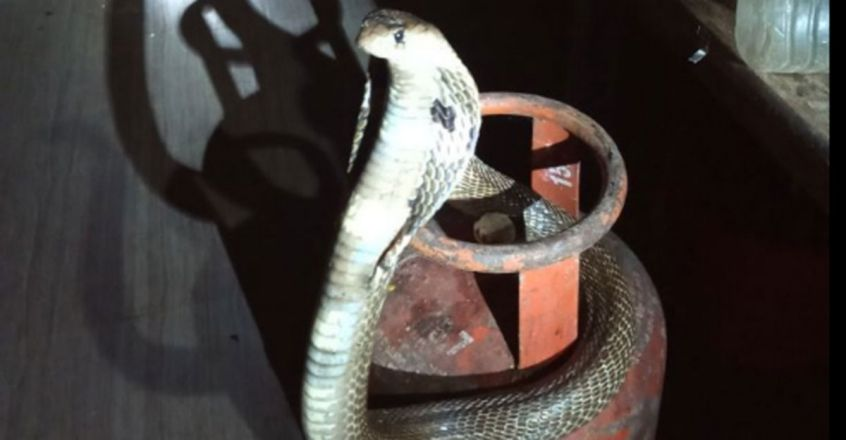 Snakes on a gas cylinder
