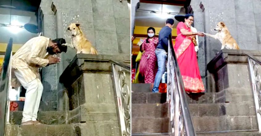 Dog Shakes Hands With Devotees Outside Temple