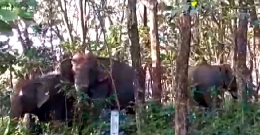 Wild Elephant send back to the forest