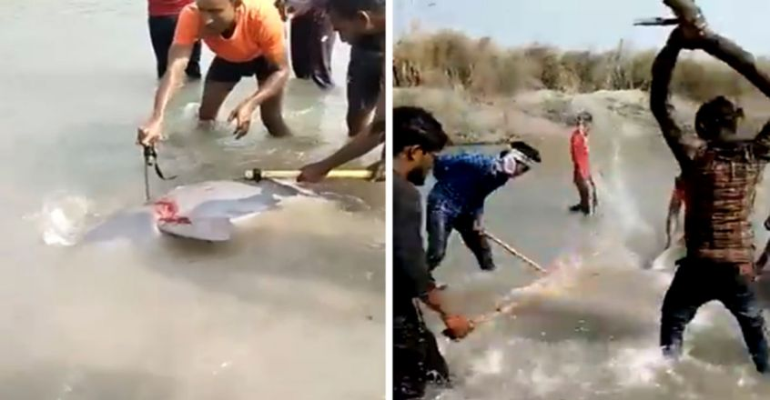 Gangetic Dolphin Beaten To Death In UP, 3 Arrested