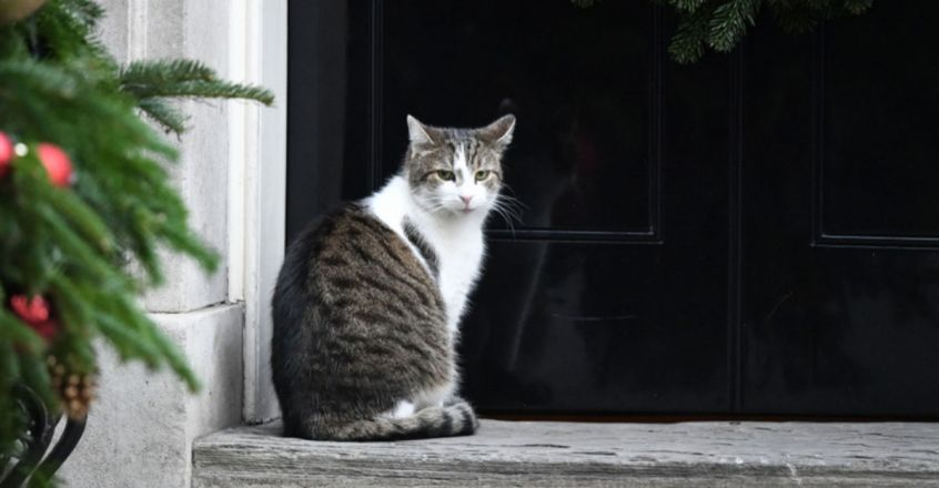 Larry the cat celebrates 10 years at 10 Downing Street