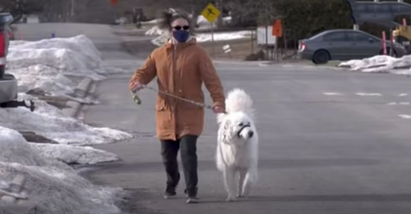 Dog Saves Owner Who Had a Seizure During Walk
