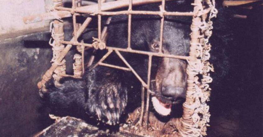 Overview of Bear Farming and the Trade in Bear Bile