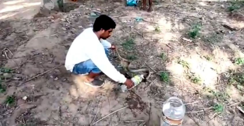 Man helps snake drink water from bottle in viral video from Tamil Nadu