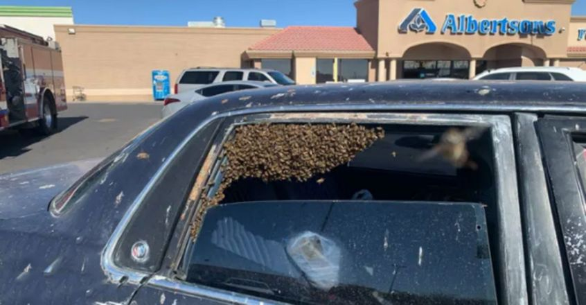 US man returns from swift shopping trip to find 15,000 bees in his car