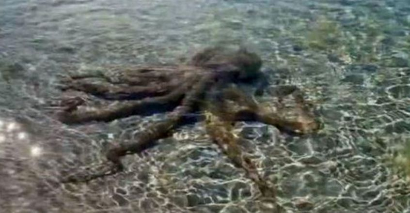 Man In Australia Goes Out For A Swim, Gets Beaten Up By 'Angriest Octopus'