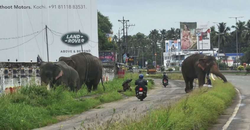 Elephant owners and Elephants in Kerala suffer due to Covid-19