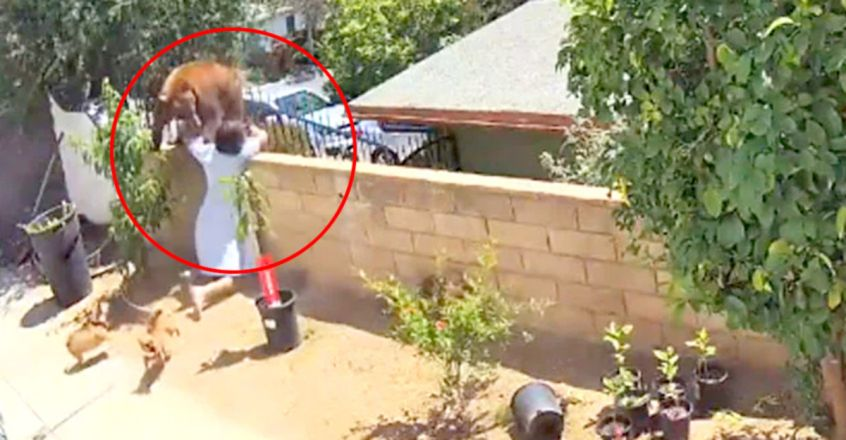 Shocking Video Shows Teen Pushing Bear Off Wall To Save Her Dogs