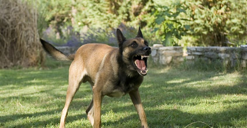 Angry After It Bit His Wife, Indore Man Allegedly Shoots Neighbour's Pet Dog