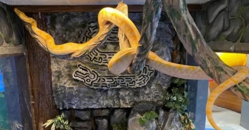 12-Foot Snake Escapes Zoo, Found In Shopping Mall After 2 Days
