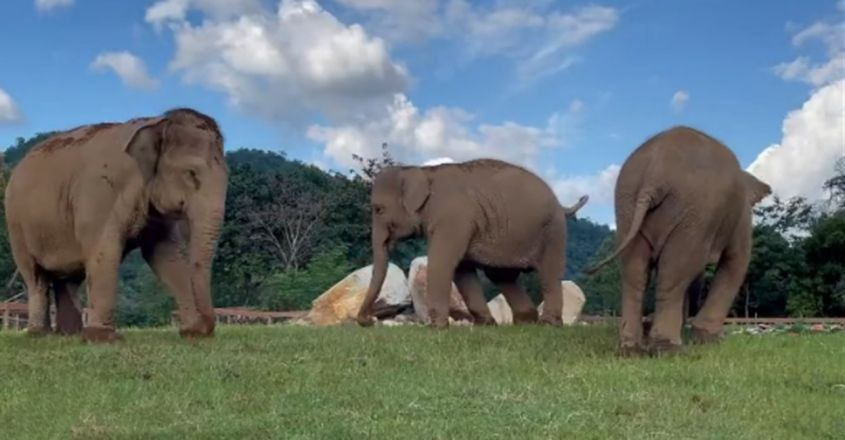 Elephant Guides Friend Who Can't See In Heartwarming Clip