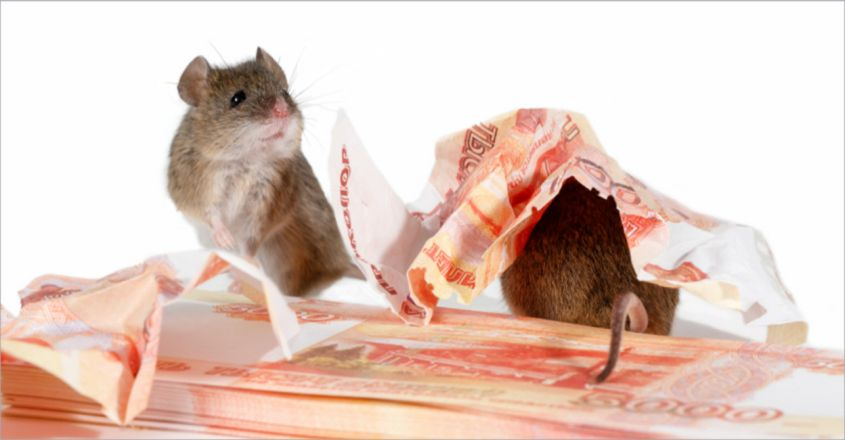 Rats Nibble Rs 2 Lakh Cash Saved By Telangana Farmer For Surgery