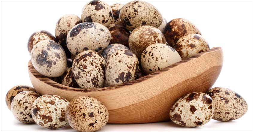 quail-egg