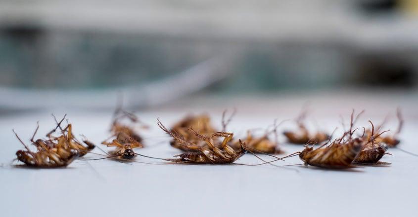 cockroach-dead