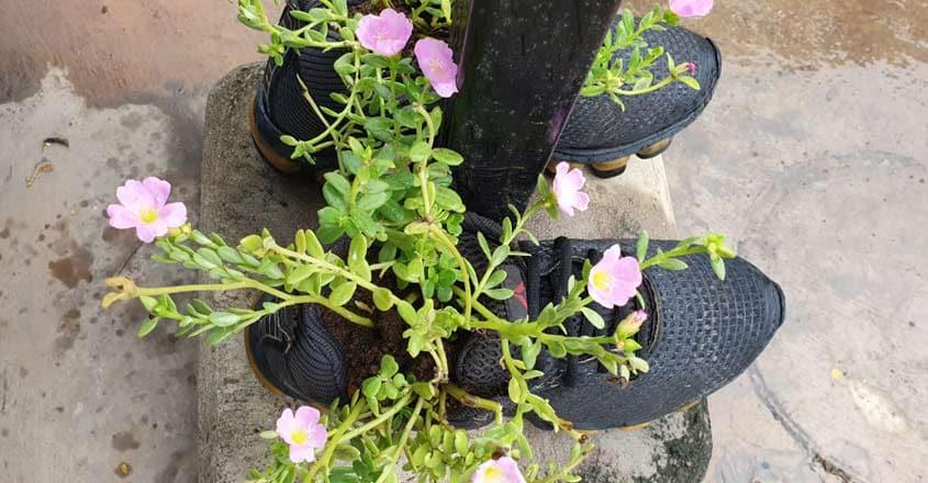 usha-shoe-garden