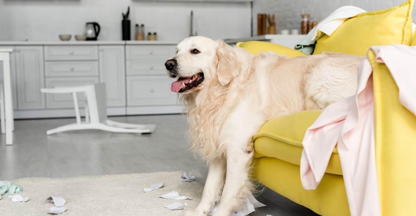 dog-in-bedroom