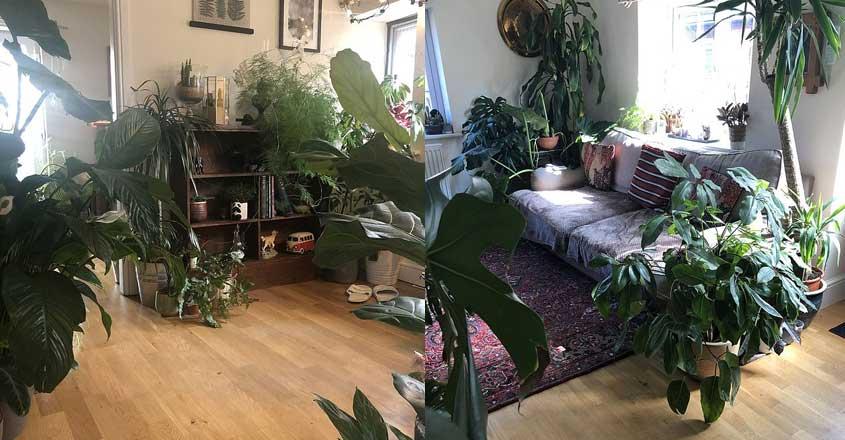 mini-garden-house