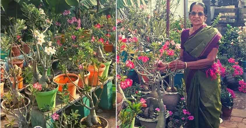 saroja-chennai-garden