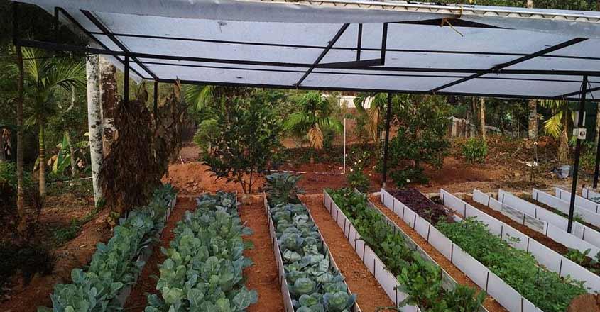green-homestay-farm