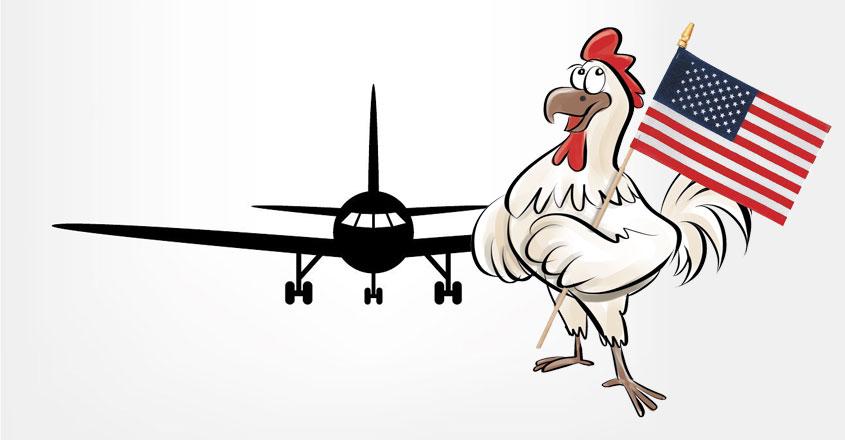 american-chicken