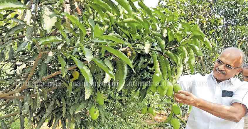kozhikode-tree